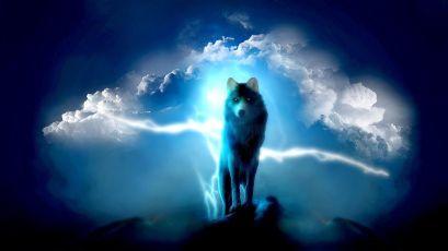 lupo blu